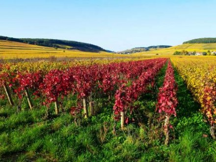 private tour burgundy