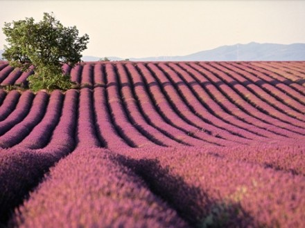 Excursion Provence Lavender Fields